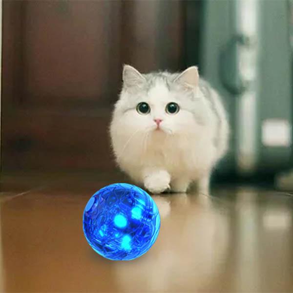 kitten ball toy